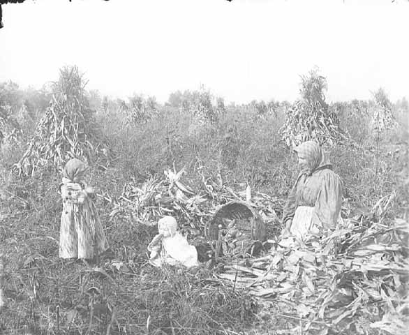Woman and children among corn shocks, McLeod County.